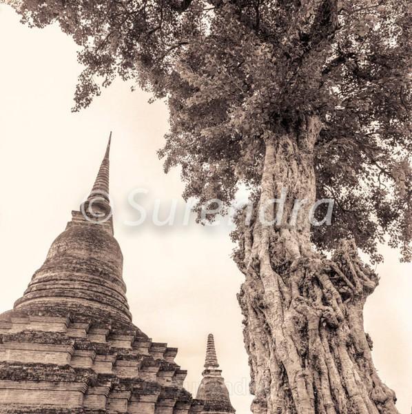 Wat Mahathat # 4 - Sukhothai  スクタイ