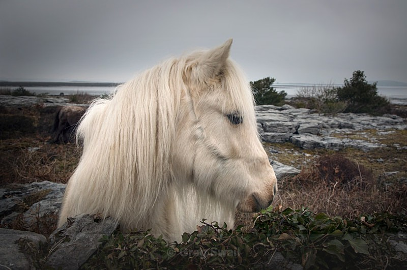 Burren Pony - Landscapes of Ireland - County Donegal and the Wild Atlantic Way