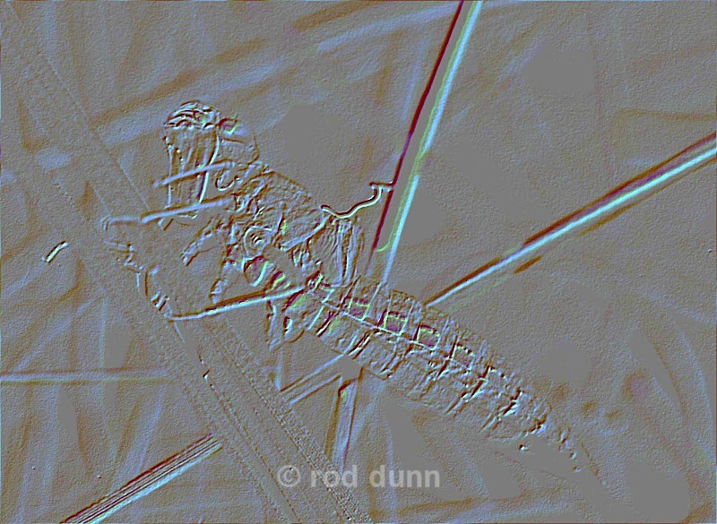 exuvium fossil - art images