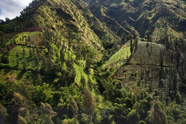 Mountain Farming - Volcano Dawn (Bali and Beyond)