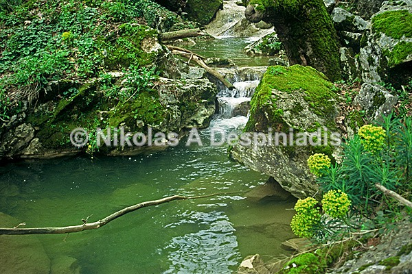 Nymphs stream I Νεραϊδόρεμα - Αττική Ι Attica