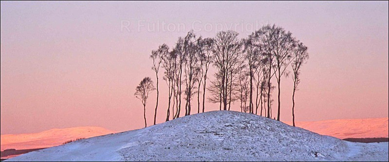 Winter Treeline - Landscapes