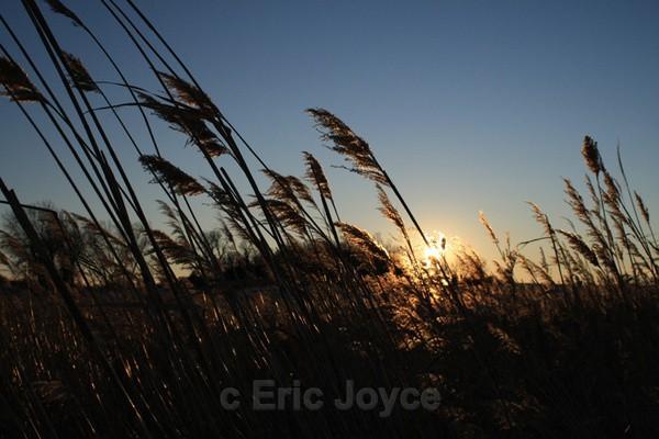 Blue sky over sloughgrass - SW Minnesota
