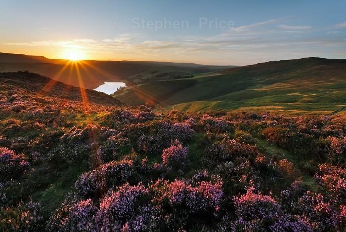 Evening Peak District Heather | Sunburst over Heather Field