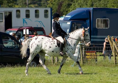136 - Moniaive Horse Show 2008