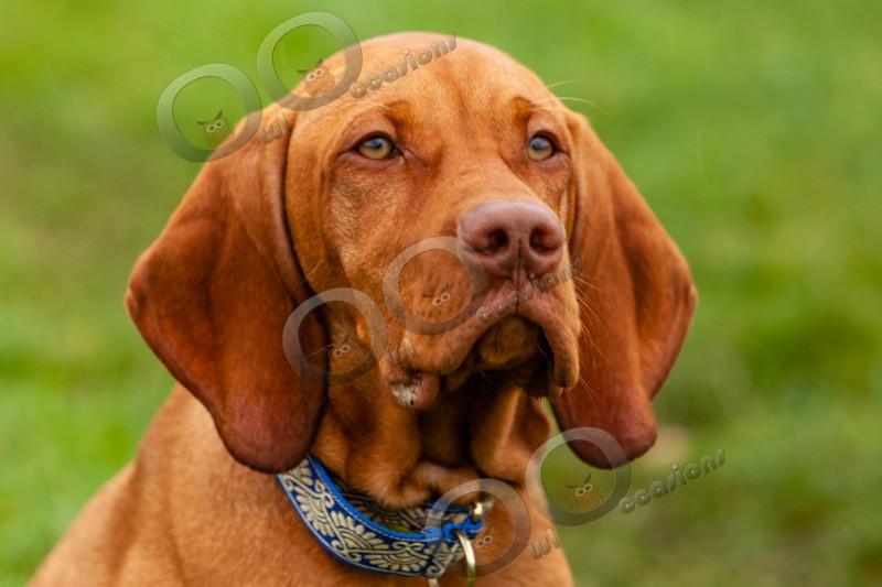 Vitsula_4078 - Pet Photography