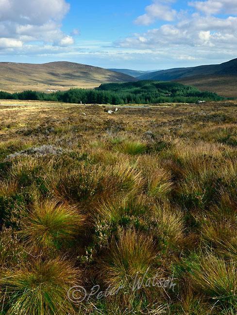 Near Laragh Wicklow - Ireland