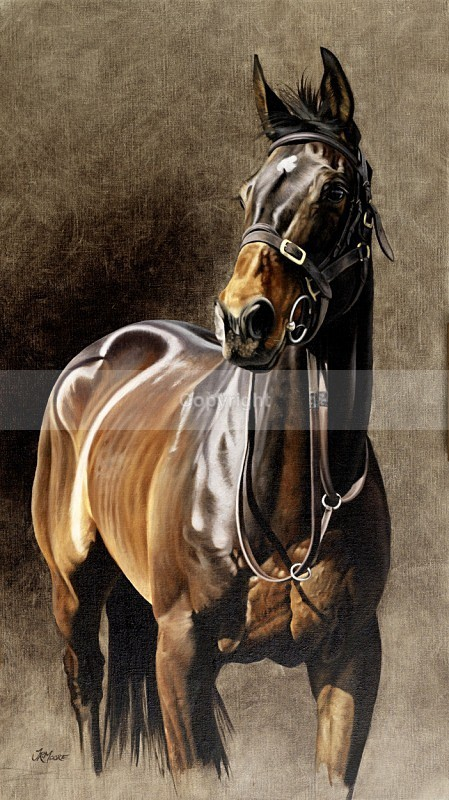 The point to pointer - Equine