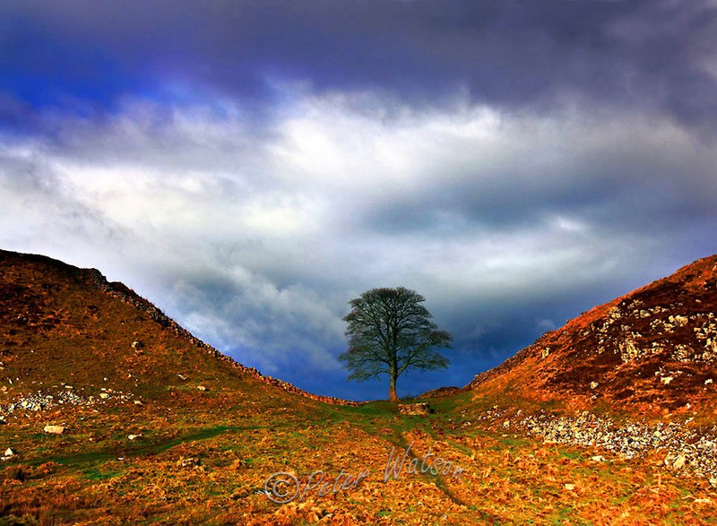 Sycamore Gap Hadrian's Wall Northumberland - England