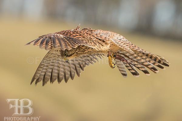 wow march 16 Photo day-111 - Birds of Prey