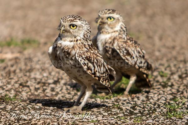 muncaster-13 - Birds of Prey