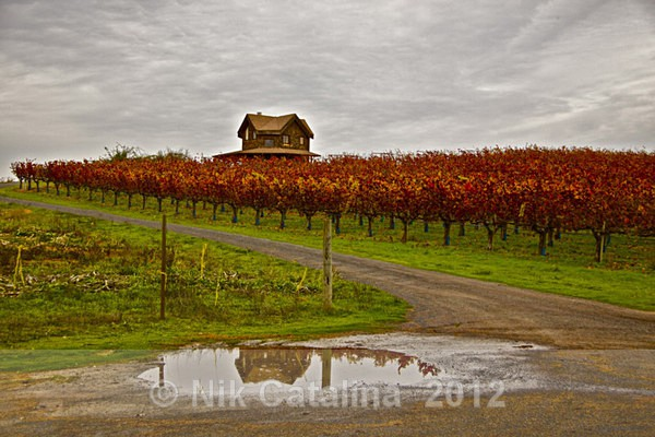Autumn Vineyard Rain - Landscapes