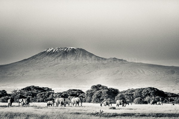 Kenya, Kilimanjaro, Amboseli