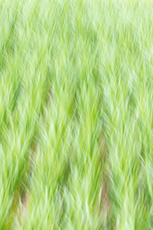 crops2 - Moravia