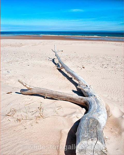 Driftwood at Lossiemouth - Scottish Highlands