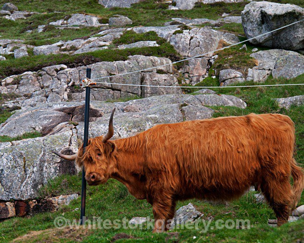 Washing Line Head Scratch! - Scottish Highlands