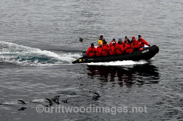 Group returning to ship on Zodiak - Antarctica