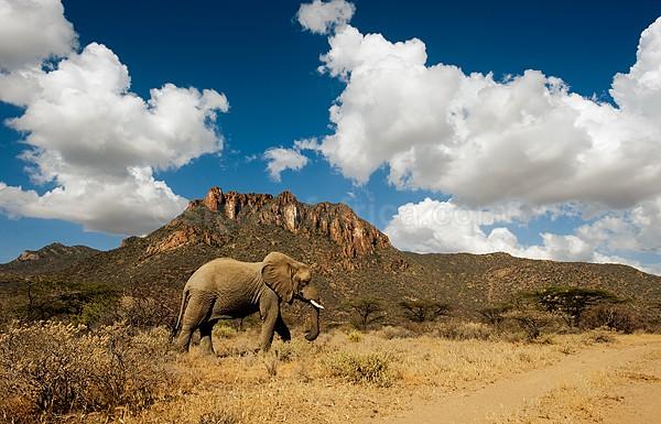 Elephant Shaba, Kenya