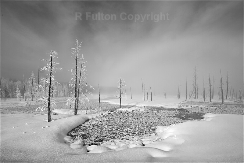 Winter Trees Mono V1F - Yellowstone
