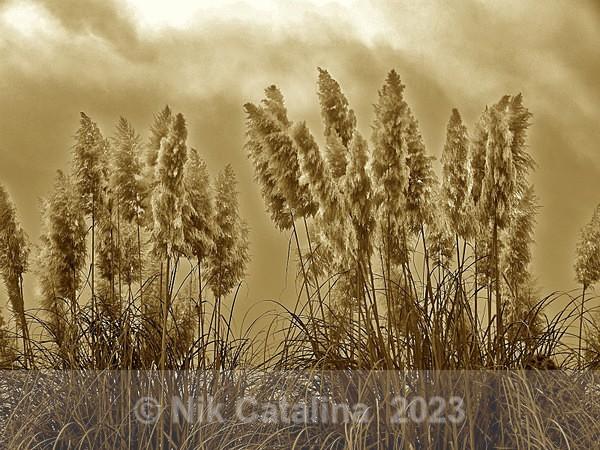 Grass & Sky - Landscapes