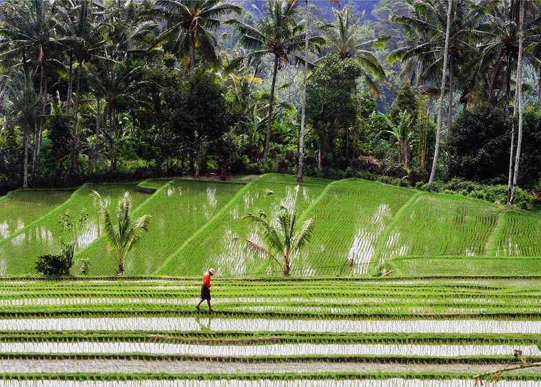Pupuan Rice Fields - Bali's Lush Heartland