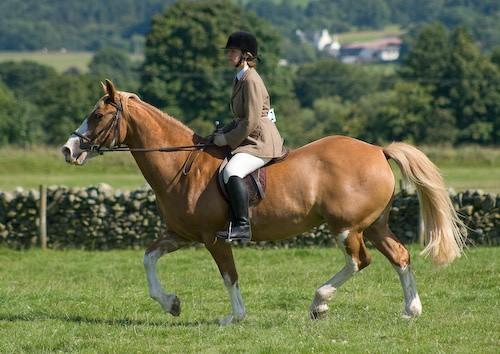 127 - Moniaive Horse Show 2008