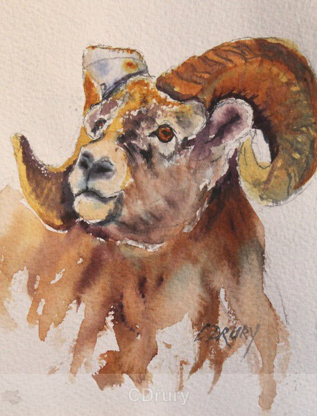 Bighorn Sheep - Watercolor