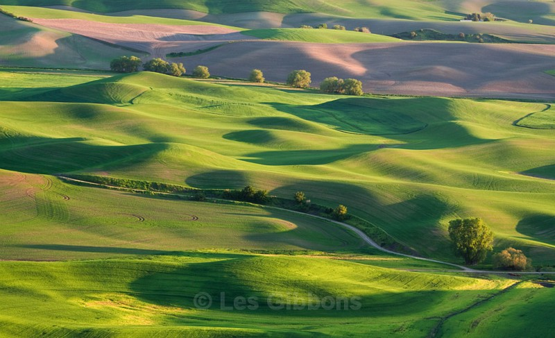 fields 1 - Palouse