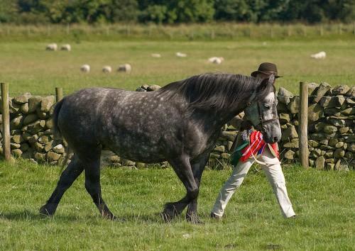 157 - Moniaive Horse Show 2008