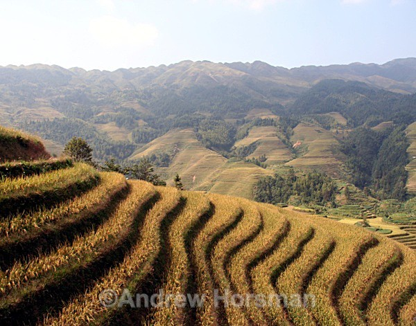 Longshen Rice Terraces - Travel 1