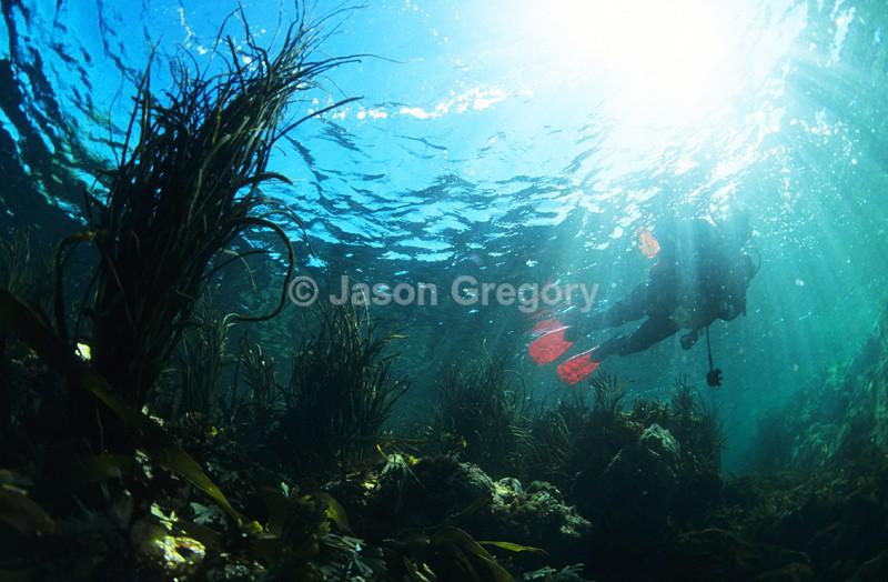 Diver at surface - Diver exploring marine environment