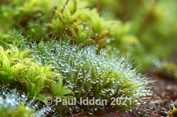 Morning Dewdrops Landscape - Macro