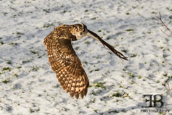 birds-50 - Birds of Prey
