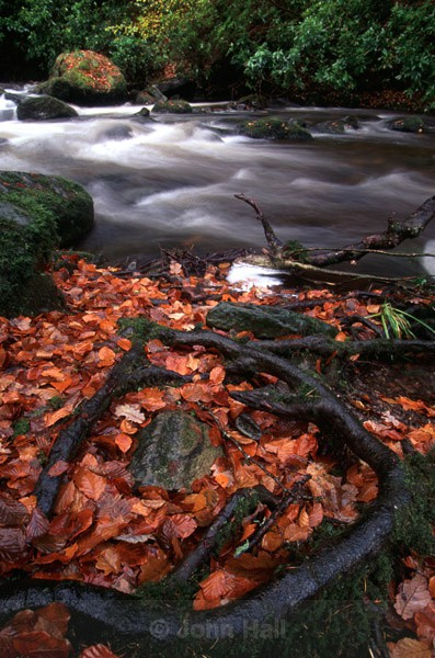 autumn river scene, near torc waterfall, killarney, co. kerry, ireland.