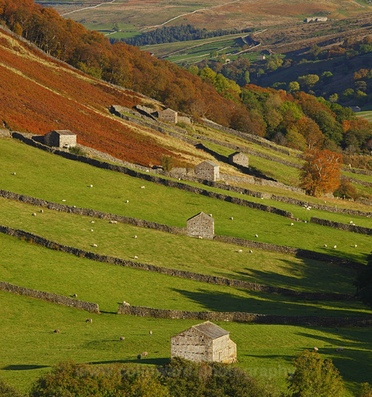 Swaledale Barns               ref 4367 - The Pennines and The Lake District