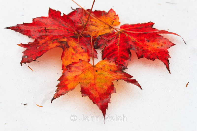 - Fall Foliage Season Transitions