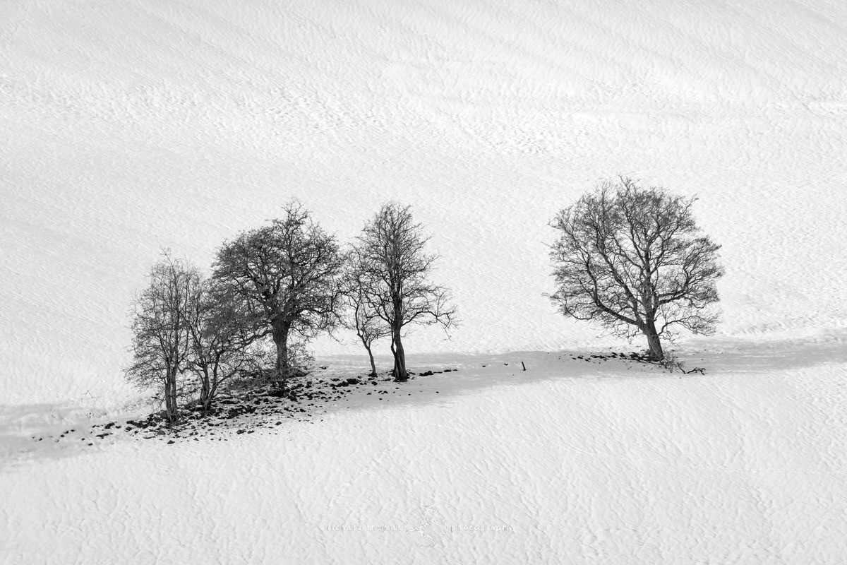 Snow Grove - Peak District - WINTER