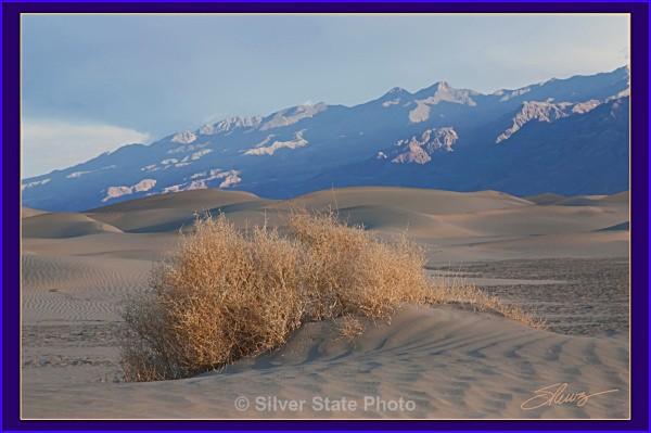 Mesquite Sand Dunes - Death Valley - Nevada (mostly) Landscapes
