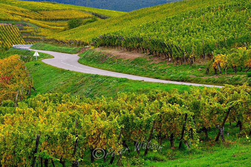 Turckheim Vineyards Alsace - France