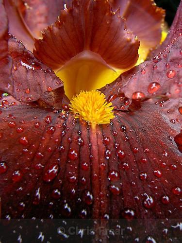 - Botanical/Macro