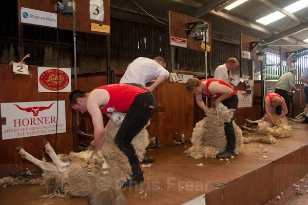 20 - Shearing Competition