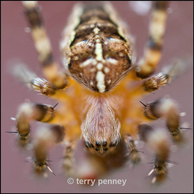 - Insects & Spiders