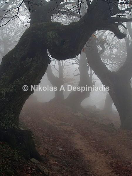 - Δέντρα Ι Trees