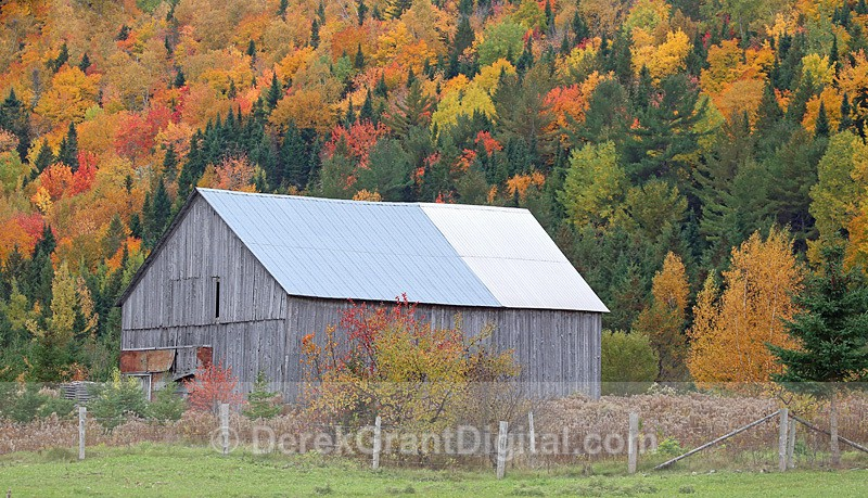 Country Barn in Autumn New Brunswick Canada - Old Barns & Buildings