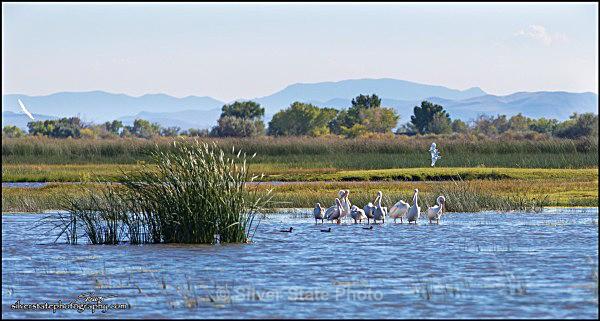 IMG_8893-1-a-web - Nevada Birds