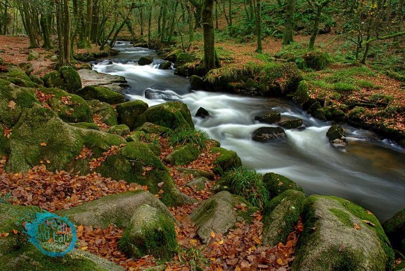 Autumn Woodland - Landscapes