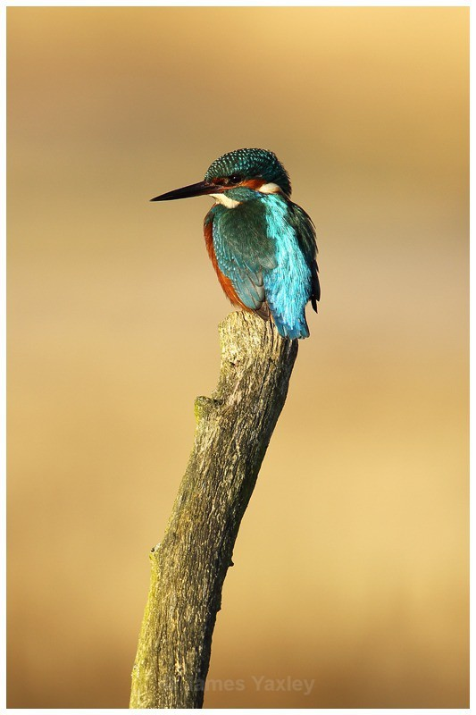 Kingfisher 5 - River Scrape & Lake