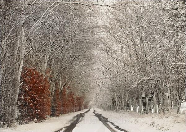 Morton Lane in Snow - Traditional Landscapes