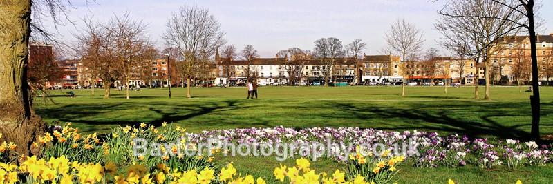 Daffodils and Crocuses - Harrogate Town