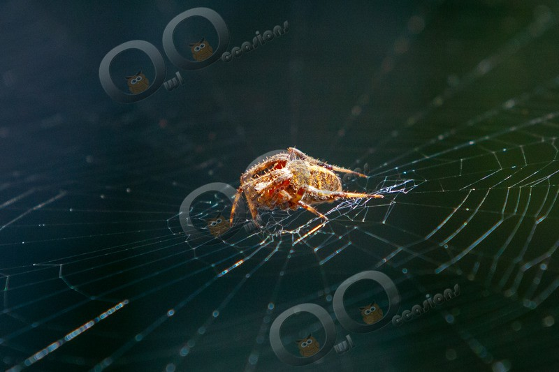 spider-8990 - Insects from around the world